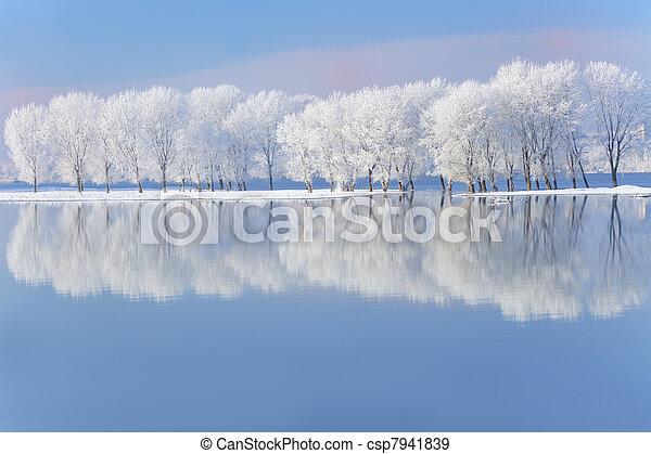 coberto, geada, Inverno, árvores - csp7941839