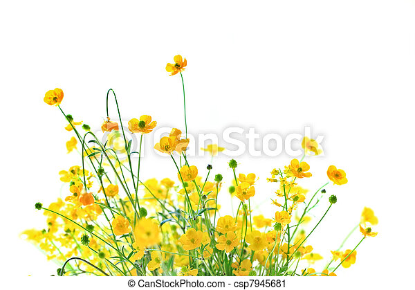 Little yellow flowers on white background and copy space