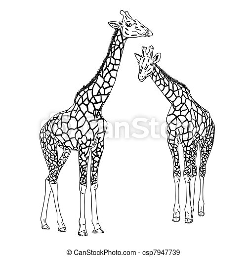 EPS Vectors of Two giraffes. Vector illustration. csp7947739 - Search ...