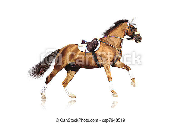 galloping sportive horse isolated - csp7948519