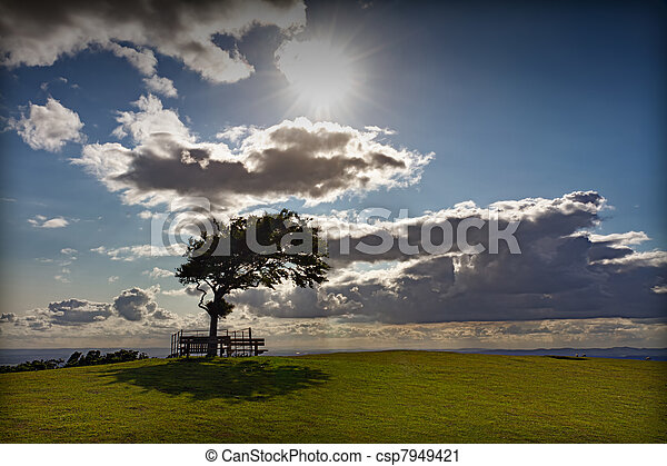 Tree with sun at Cleeve Hill on a windy day, Cotswolds, England - csp7949421
