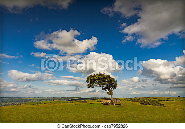 Tree with sun at Cleeve Hill on a windy day, Cotswolds, England - csp7952826