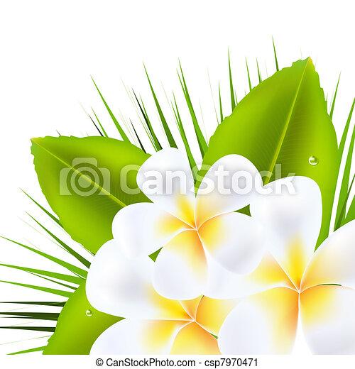 Beautiful Frangipani - csp7970471