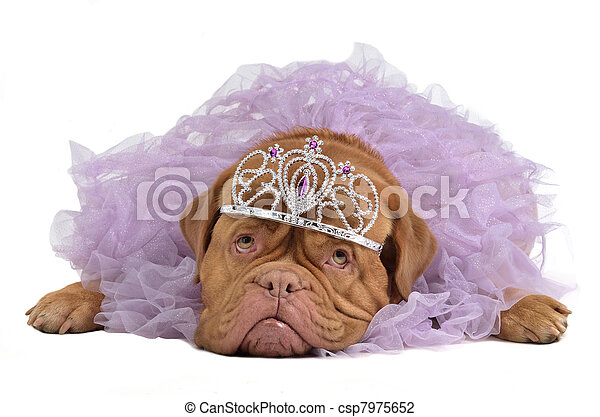 Royal dog with crown - csp7975652