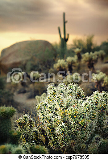 Beautiful Arizona desert location - csp7978505