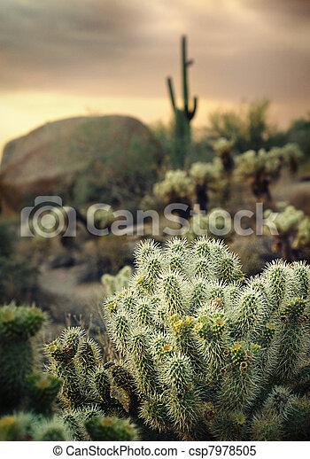 Beautiful Arizona desert location - csp7978505
