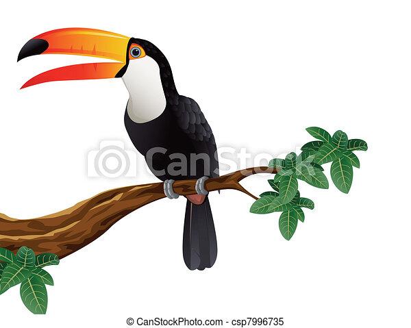 Toucan bird - csp7996735