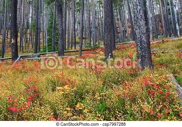 Lewis and Clark National Forest - Montana - csp7997288