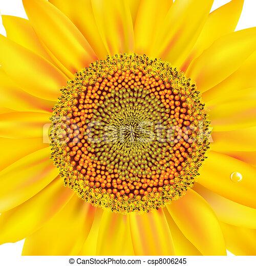 Sunflower Closeup - csp8006245