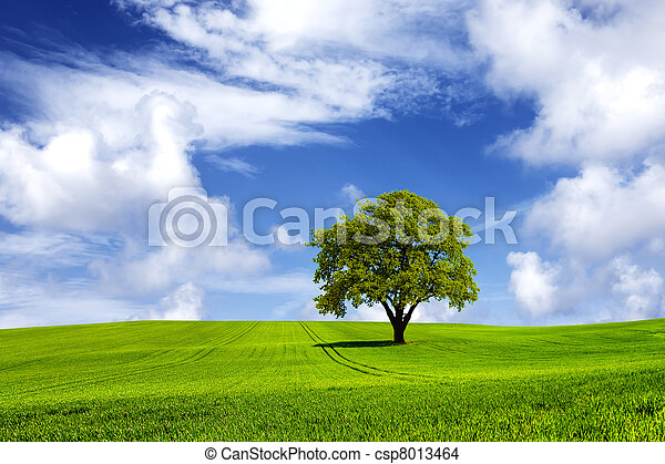 Energie, grün - csp8013464