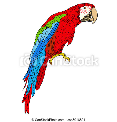 Macaws. Vector illustration. - csp8016801