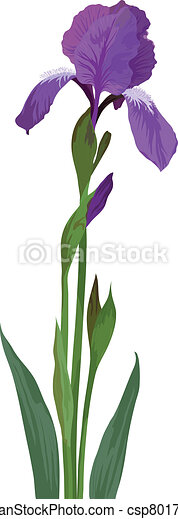 Vector flower iris stock illustration royalty free illustrations