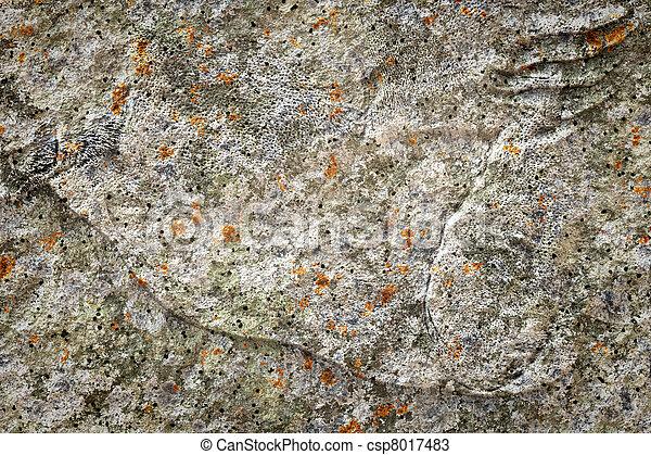 old stone lichen background - csp8017483