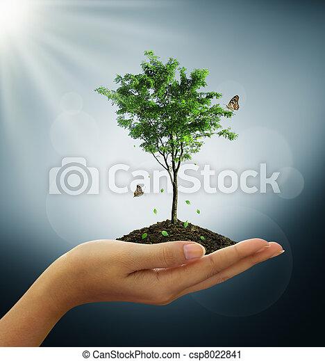 生長, 綠色的植物, 樹, 手 - csp8022841