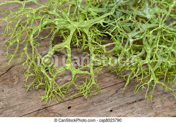 Stock Photography of close up of the green spanish moss on ...