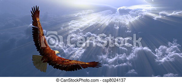 Eagle in flight above tyhe clouds - csp8024137