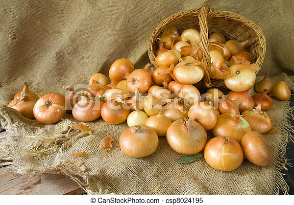 harvested onion on sacking - csp8024195