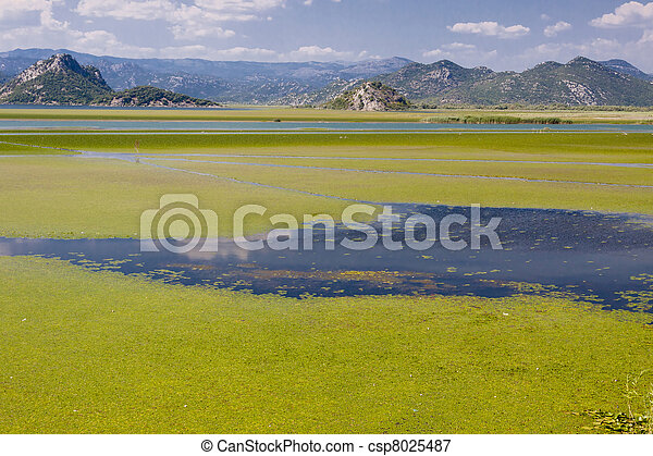 Montenegro, Skadarsko lake - csp8025487