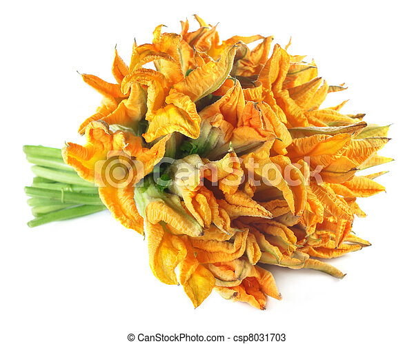 Edible pumpkin flower - csp8031703