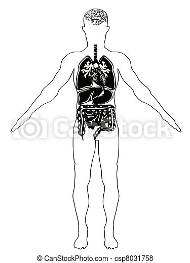 human anatomy - csp8031758