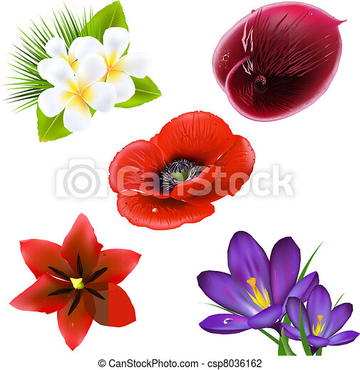 Set Of Realistic Flowers - csp8036162