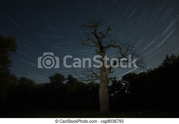 old oak in front of the stars at Ivenack, Mecklenburg-Vorpommern, Germany - csp8036793