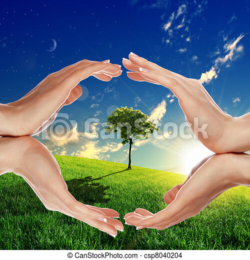 Human hands and green plant - csp8040204