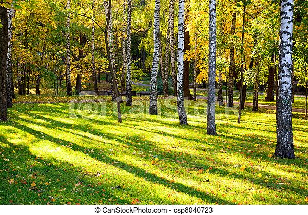 stock fotos von sch ne sonne schatten birchwood herbst landschaftsbild csp8040723. Black Bedroom Furniture Sets. Home Design Ideas