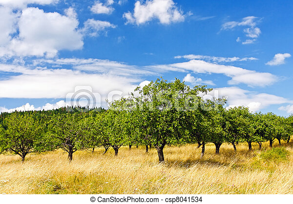 Apple orchard on blue sky  - csp8041534