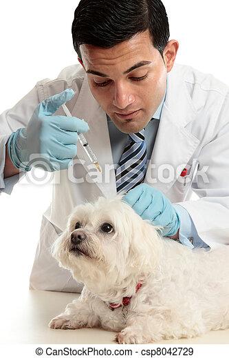 Vet medicating small dog needle - csp8042729