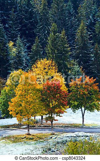 Coloré, feuillage, montagne, secondaire, route, (carpathian, ukraine