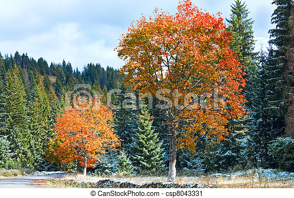 First winter snow and autumn colorful foliage near mountain secondary road (Carpathian, Ukraine) - csp8043331