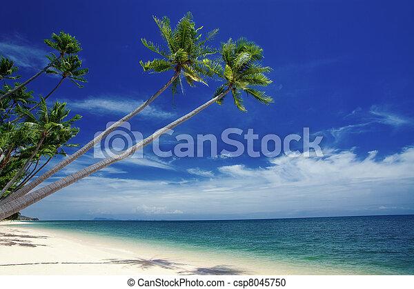 tropic - csp8045750