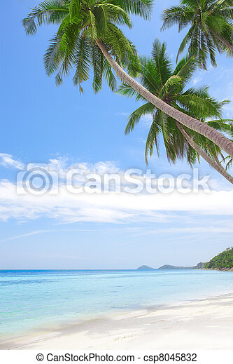 tropic - csp8045832