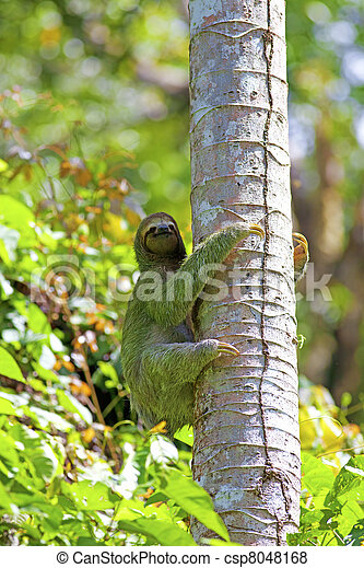 A Three-toed Sloth - csp8048168