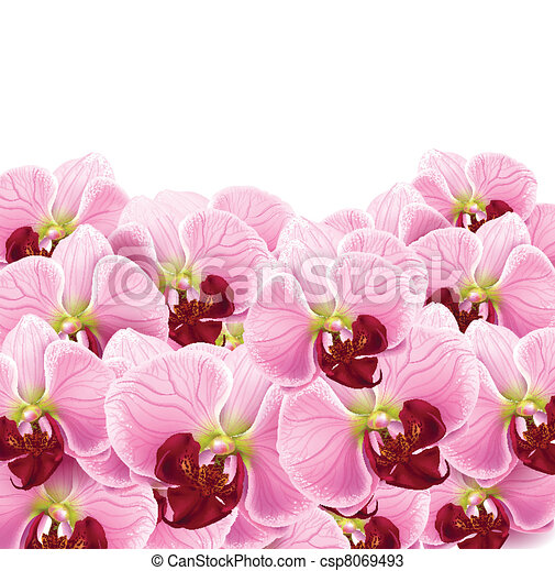 orchid flowers greeting card background - csp8069493