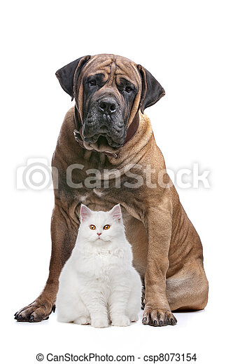 strong dog and a show cat - csp8073154