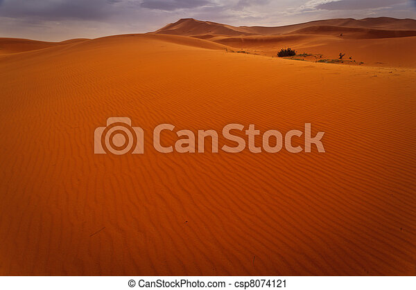 Wind rippled expanse of sand dune  - csp8074121