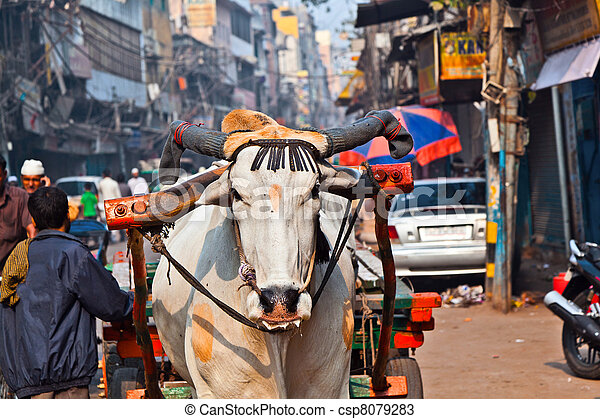 Ox cart transportation on early morning  in Delhi, India - csp8079283