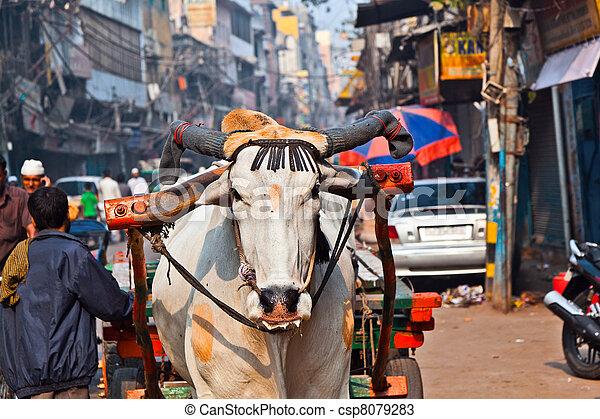 Ox cart transportation on early morning  in Delhi, India - csp8079283