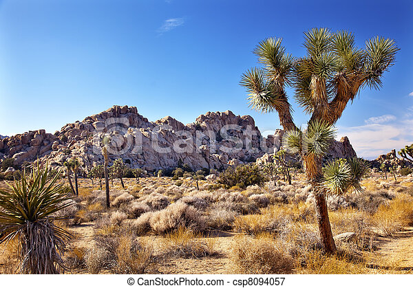 Joshua Tree Landscape Yucca Brevifolia Mojave Desert Joshua Tree National Park California Named by the Mormon Settlers for Joshua in the Bible because the branches look like outstretched hands - csp8094057