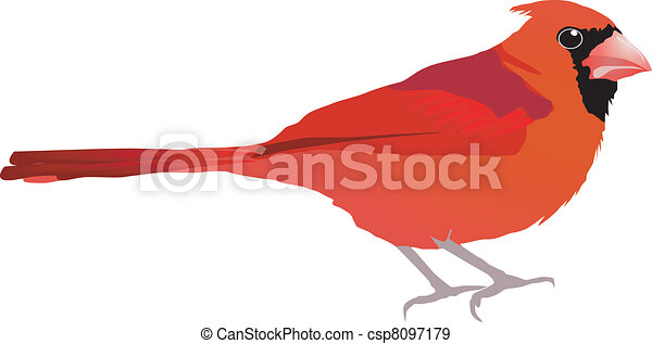 Beautiful red bird. Vector EPS10 - csp8097179