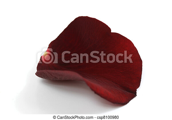 Red Rose petal - csp8100980
