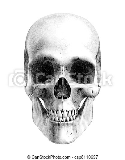 Human Skull - Front View - csp8110637