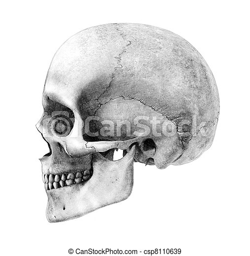 Human Skull - Side View - csp8110639