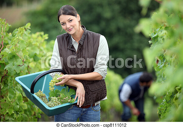 Farming couple collecting grapes - csp8111012