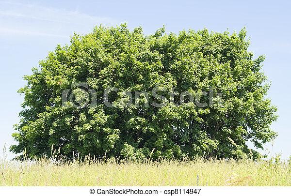 Blue sky, green bush, yellow grass - csp8114947