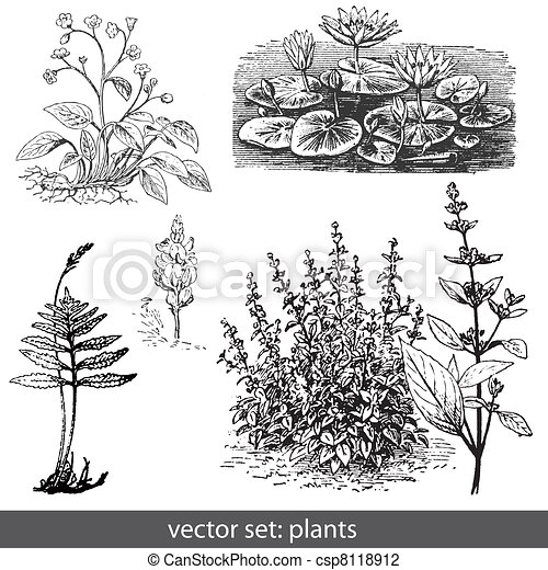 vector set plants and flower - csp8118912