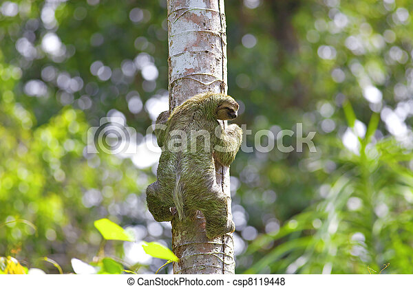 A Three-toed Sloth - csp8119448