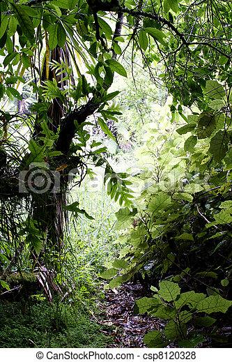 Tropical jungle - csp8120328